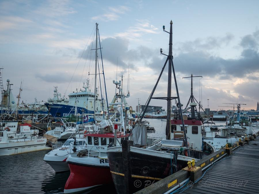 レイキャビク漁港