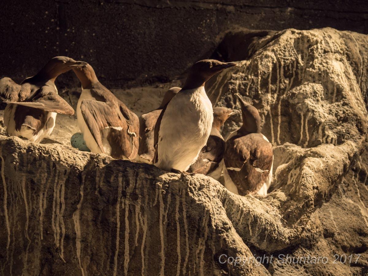トロムソ水族館