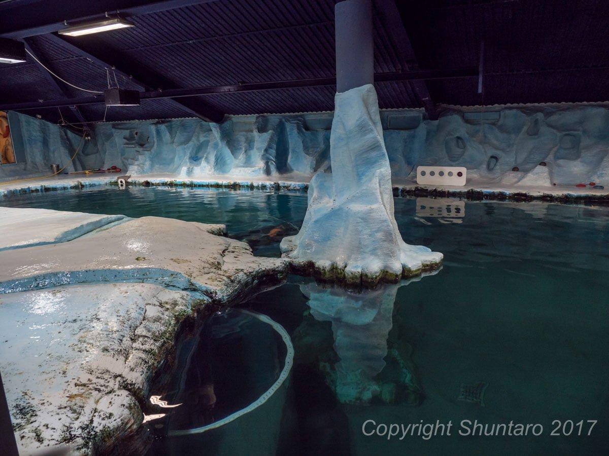 北極アザラシ