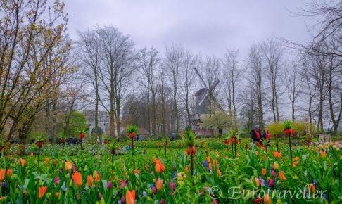 オランダのチューリップ